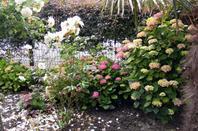 Un petit tour dans notre jardin il y a du soleil++++
