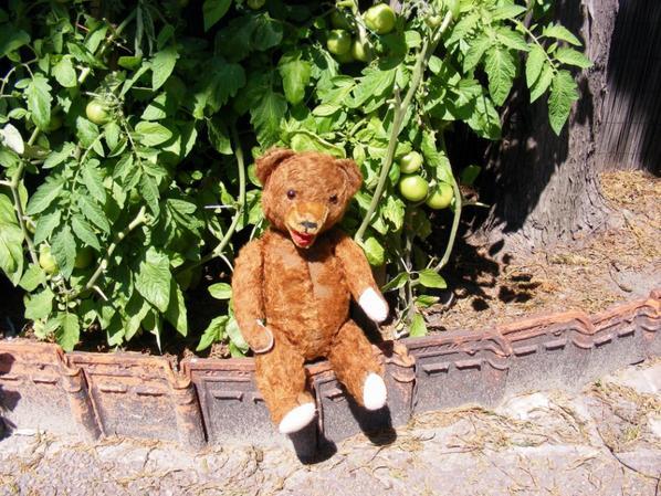 Arcène devant les tomates verts vous fait un petit coucou++++