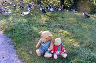 Promenade de L'automne de ce matin avec Archibald et Justin+++