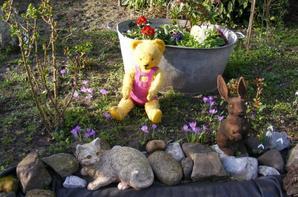 Hier c'étais presque le printemps mon Séphirin  fessait la pause dans notre jardin+++