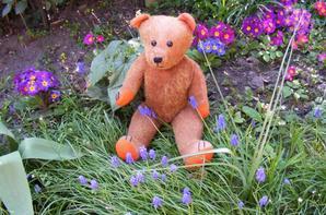 Un petit coucou de mon dernier ours Octavio au jardin +++