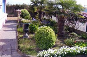 Mon Grégoire vous montre notre Palmier en fleurs dans notre jardin.