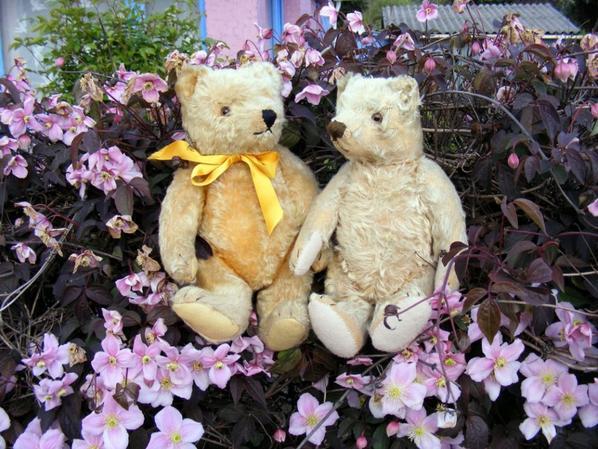 Mes deux ours Steiff dans les fleurs Climatite vous souhaite une bonne journée+++