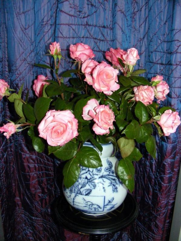 J'ai du couper mes belles roses à causes de la tempête le vent est très fort ici+++