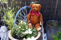 Kurt dans notre jardin ,le passiflore en fleur et il donne des fruit délicieux+++