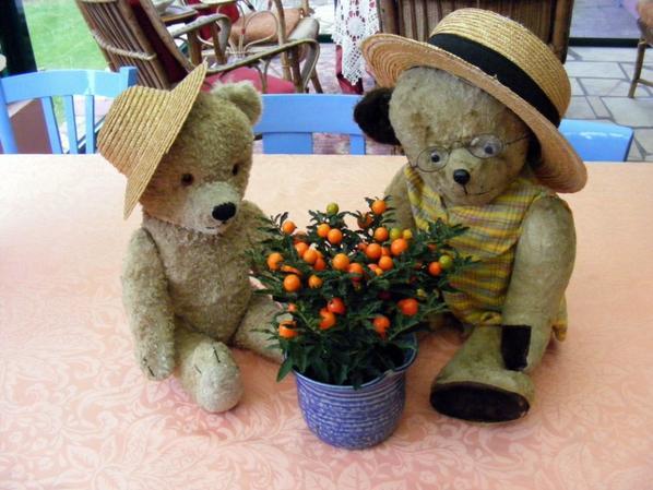 Damien et Sébastien  autour du pommier d'amour vous souhaite à tous un beau dimanche++++