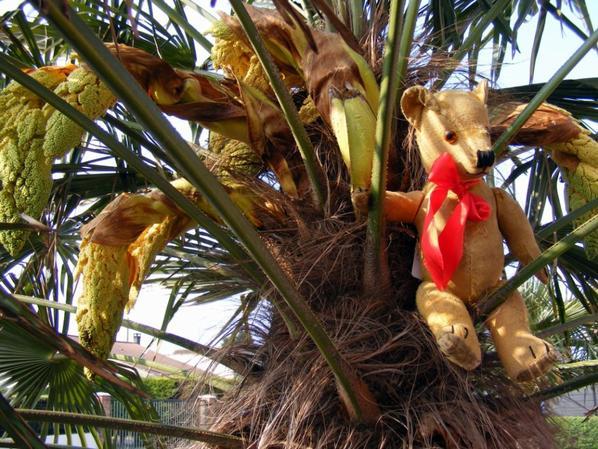 Manfred dans le palmier fleuris il vous fait un petit coucou à vous tous+++