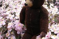 Je vous montre l'ours pour mon anniversaire est arrivé hier,