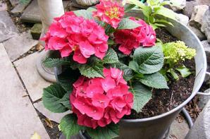 Quelques fleurs de notre jardins+++