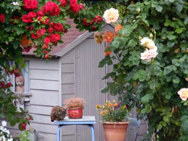 Se matin visite surprise dans notre jardin 2 chats!