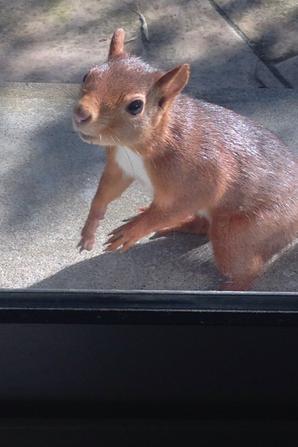 Mes petits écureuils ❤❤❤