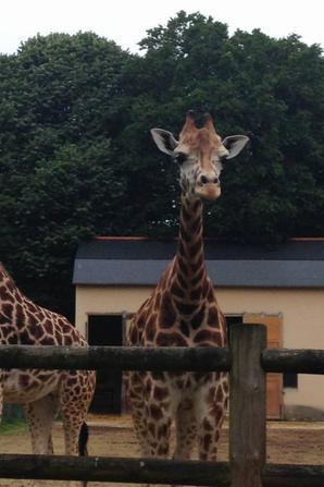 Suite sortie au zoo