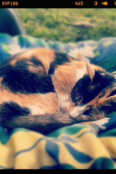 Choupette mon chaton <3