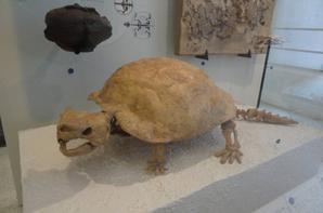 Musée d'histoire naturelle - part 2