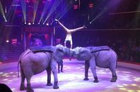 Cirque D'hiver Bouglione 2016 (Extrait du spectacle)