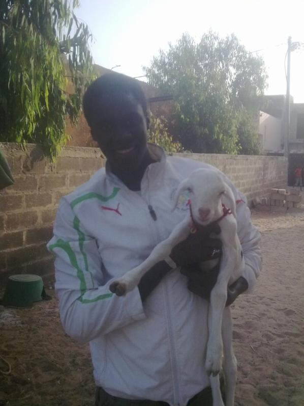 moi et mon bebe mouton