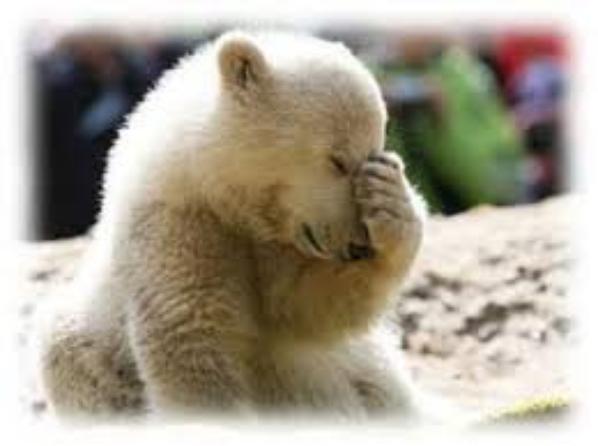 un ptit coucou spécial à mon ami ours