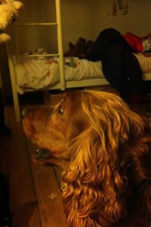 mon chien mon meilleur ami