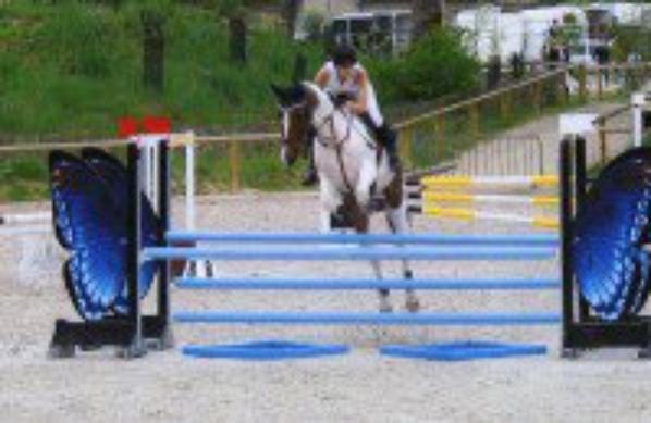 concour flechage chevaux