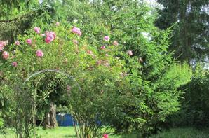 J'ai vu sur certains blogs de jolis jardins voici le mien !