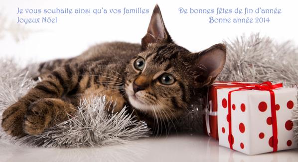 des joli chats