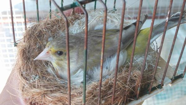 verider d'ecosse agate au nid 2015