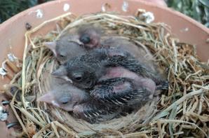weer mooie nestjes