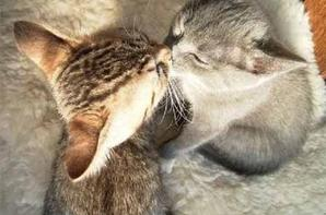 Les animaux trop mimi ♥
