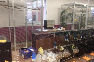 Bourse & exposition d'oiseaux d'Estrées