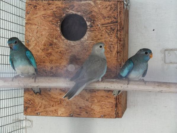 jeunes bleu pb et argenté