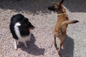 Rencontres de chiens !