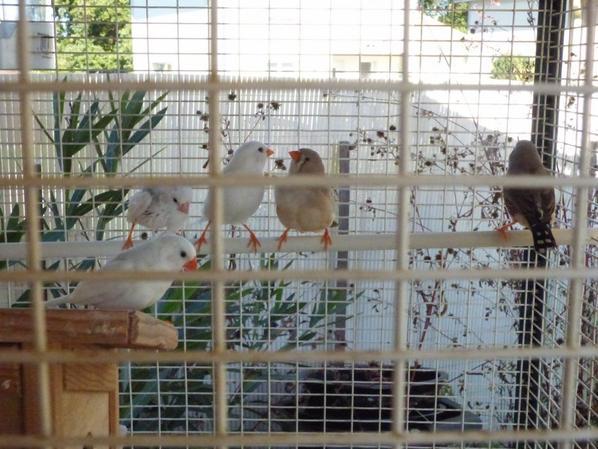 primprenelle et nicolas2  et leurs enfants