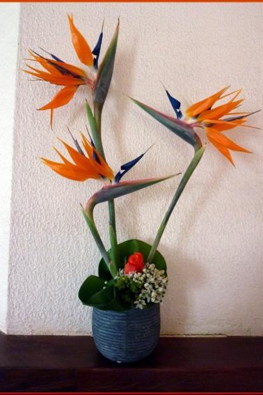 J'ai de la chance cette année, mon strélitzia m'a donné 12 fleurs