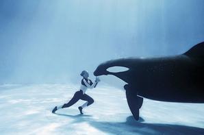 orca mon animal préféré