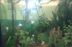 mes aquarium