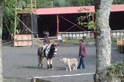 » Très loin, au plus profond du secret de notre âme, un cheval caracole... un cheval, le cheval ! Symbole de force déferlante, de la puissance du mouvement, de l'action.