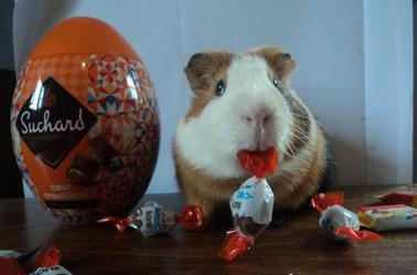 Photoshoot Pâques