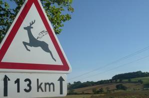 En ariege, les chevreuils volent!!! :D