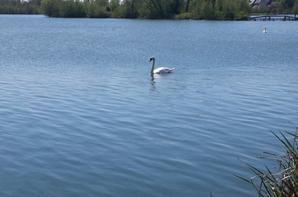 Petite balade au étang de péronne le 1 mai 2016