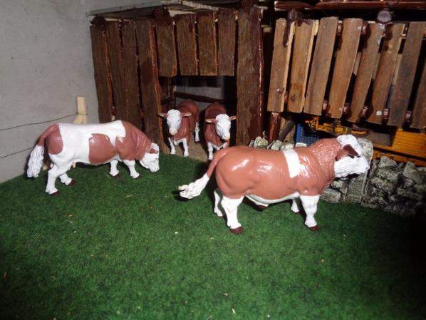 Nouveatee: vaches et teaurau simentales + porte sur la prairie