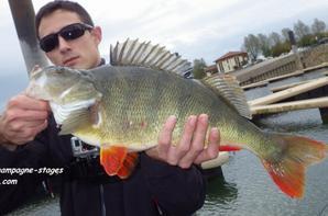 Stage de pêche des carnassiers au lac du Der