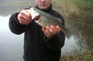 Lâcher de black bass en Haute-Marne (Champagne)