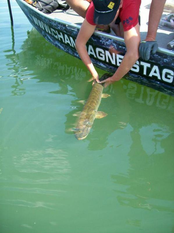 Colonie de pêche des carnassiers au lac de Madine