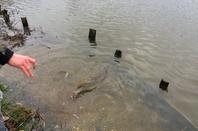 Journée de pêche au Domaine du grand étang de Narcy