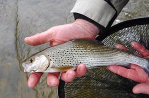 La pêche à la mouche en Haute-Marne en Champagne