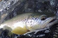 Voyage de pêche en Slovénie