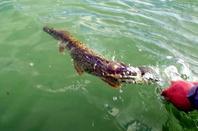 Session de pêche au lac de Madine
