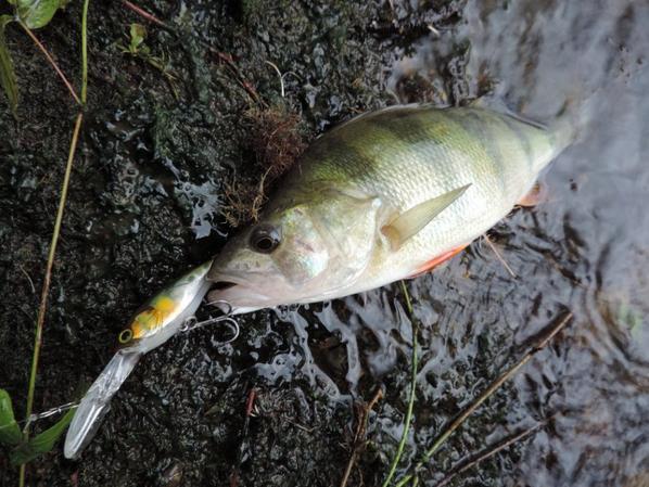 La pêche des carnassiers