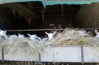 Une ferme, à Nohant, le village de George Sand