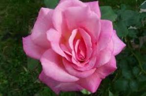 Du rose, ça vous tente ?????????????